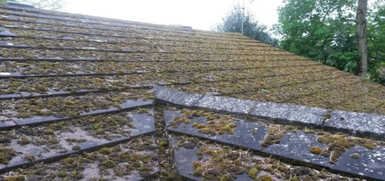 Roof Moss Removal & Cleaning new J R Cleaning