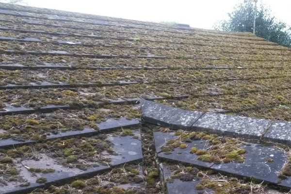 Roof cleaning Essex